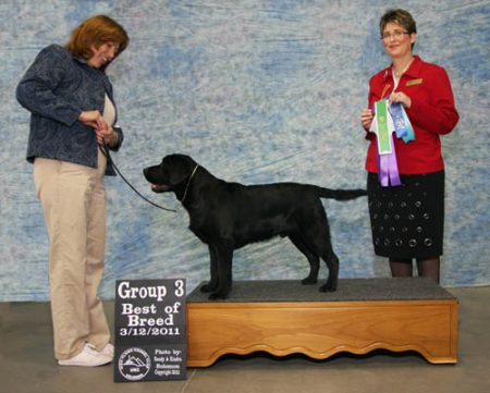 First big win - Best of Breed and Group 3