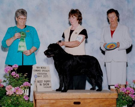 Winning Best Puppy in Specialty Show
