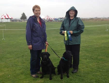 Two black Labs earning Rally obedience titles