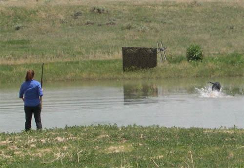 Retrieving a water mark during a hunt test
