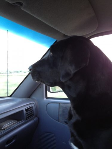 Tory was a great co-pilot on our many adventures