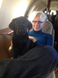 Lab puppy travels first class