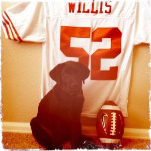 A Lab named Willis with his favorite 49ers jersey
