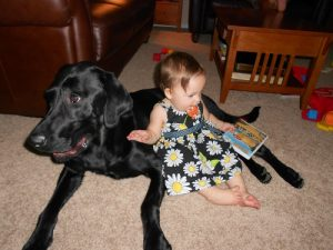 A black Lab and his favorite little girl