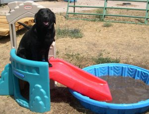 Willing to do anything I asked, Lily sat waiting for the word to slide down ramp