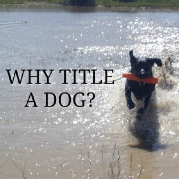 Feature_WhyTitleADog