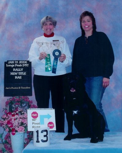 Black Labrador Retriever earning a Rally Advanced Excellent (RAE) title