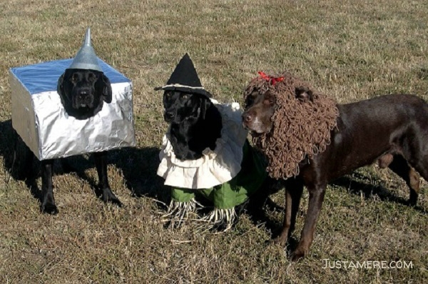Follow the yellow brick road! The tin man, scarecrow and cowardly lion costumes