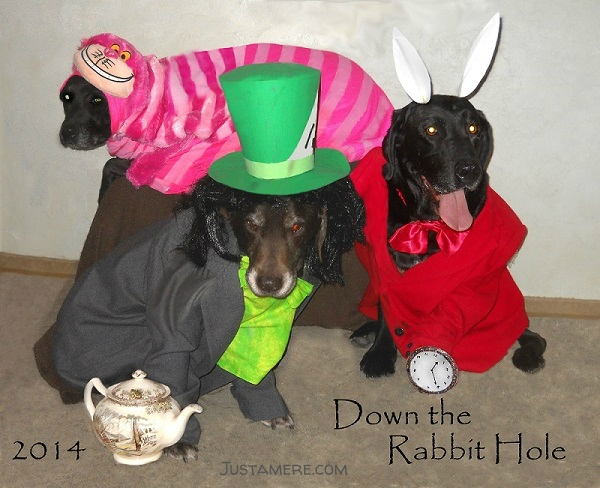 Down the rabbit hole! Halloween costumes for dogs