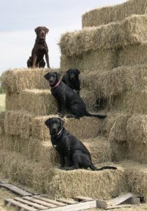 Even the dogs pitch in to help with the chores at Justamere Ranch