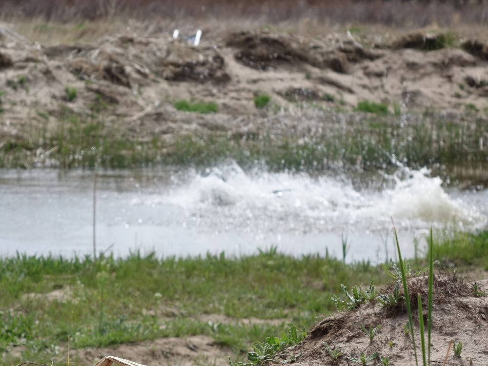 Big water entry to retrieve a bird
