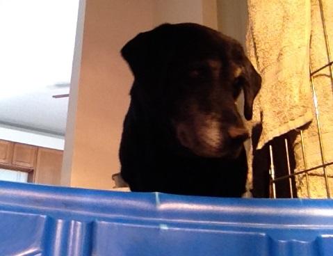 Checking newborn puppies