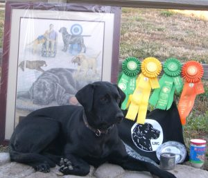 Awards won at the Labrador national specialty