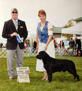 Back-to-back Best of Winners at the Arapahoe Kennel Club dog show