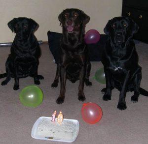 Chip's 10th birthday