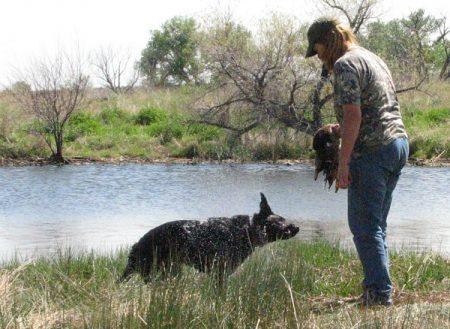 Junior Hunter pass at a retriever hunt test
