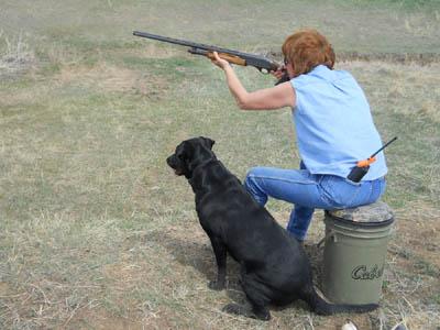 Field training. Arwen watches the first bird of a triple retrieve