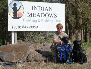 Black Labs with their hunt test ribbons