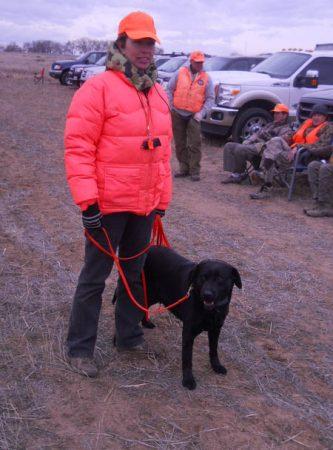 Labrador training for upland bird hunting