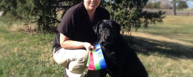 Labrador earns obedience title