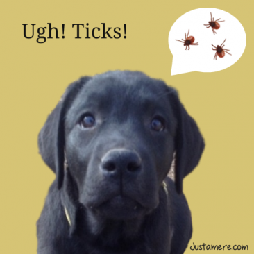 Topical tick product causes bad reaction