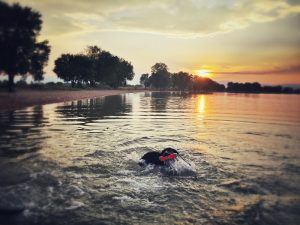 Labrador Retrievers love to retrieve and to swim!
