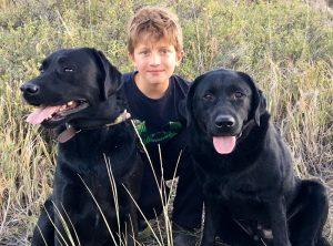 A boy and his Labrador Retrievers