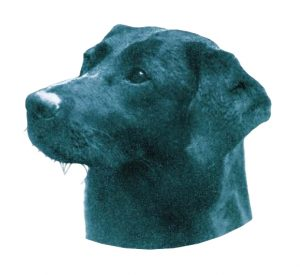 Daniel, a black Lab born in 1926 and bred by Buccleuch, a kennel that played a big part in developing the breed