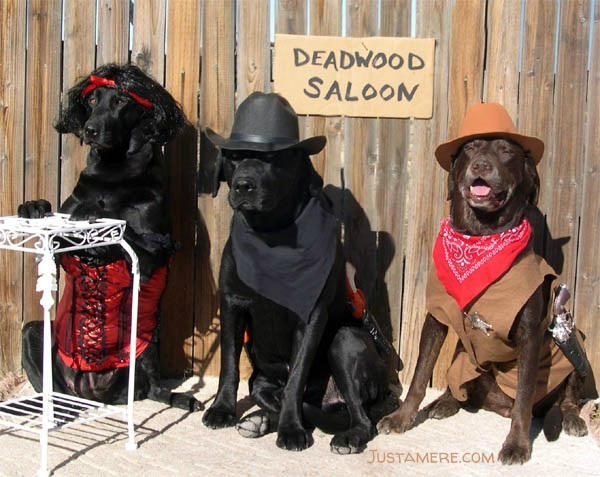 Labs dress up in western costumes - an outlaw, a sheriff and a dance hall gal