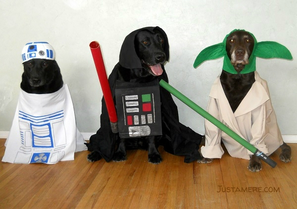 Labradors in costume as R2D2, Darth Vader and Yoda