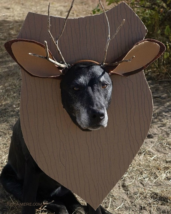 Labrador in costume as a trophy deer head