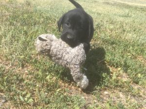 Learning to retrieve